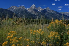 Parque nacional de Grant Tetons Fotos de archivo