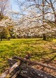 Parque nacional de Great Smoky Mountains fotos de stock royalty free