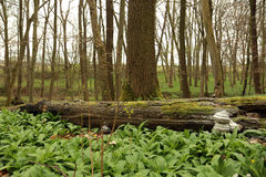 Parque nacional de Hainich, faia Forest Protection, Alemanha Fotos de Stock Royalty Free