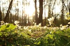 Parque nacional de Hainich, faia Forest Protection, Alemanha Foto de Stock