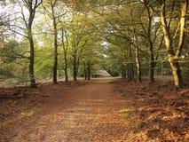 Parque nacional de Hoge Veluwe (os Países Baixos) Foto de Stock Royalty Free
