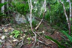 Parque nacional de Islas Vírgenes Foto de archivo