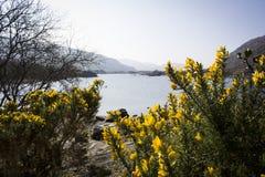 Parque nacional de Killarney Fotografía de archivo