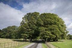 Parque nacional de Killarney, condado Kerry Foto de archivo