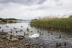 Parque nacional de Killarney - Irlanda imágenes de archivo libres de regalías