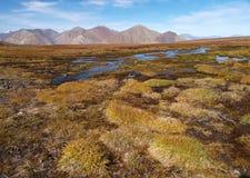 Parque nacional de Kluane imagens de stock royalty free