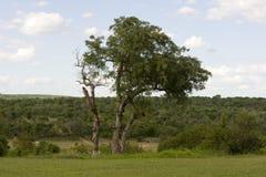Parque nacional de Kruger Fotos de archivo libres de regalías