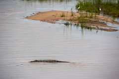 Parque nacional de Kruger, Mpumalanga, África do Sul Fotos de Stock