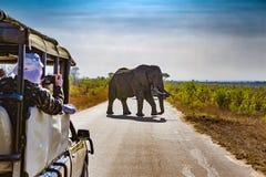 Parque nacional de Kruger, Suráfrica foto de archivo