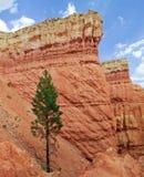Parque nacional de la barranca de Bryce, rastro de Navajo Foto de archivo libre de regalías
