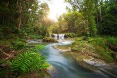 Parque nacional de la cascada profunda del bosque Foto de archivo libre de regalías