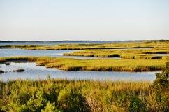 Parque nacional de la isla del assateague de los E.E.U.U. del estado de Maryland foto de archivo libre de regalías