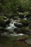 Parque nacional de la montaña ahumada del arroyo de la charla Foto de archivo