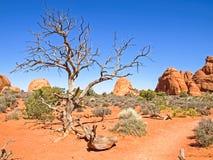 Parque nacional de la naturaleza, Utah El paisaje y las rocas Caminos y p Fotos de archivo libres de regalías