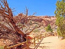 Parque nacional de la naturaleza, Utah El paisaje y las rocas Caminos y p Fotos de archivo