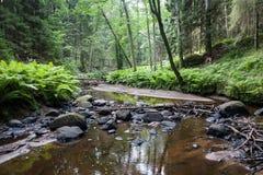 Parque nacional de Lahemaa imagens de stock
