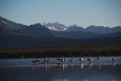 Parque nacional de Lauca - o Chile imagem de stock royalty free