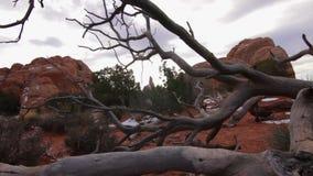 Parque nacional de los arcos, árbol muerto almacen de metraje de vídeo