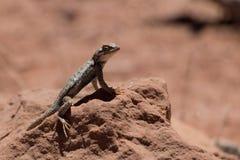 Parque nacional de los Badlands del lagarto imagen de archivo libre de regalías