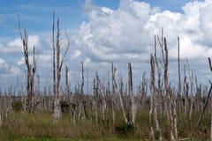 Parque nacional de los marismas en la Florida Fotografía de archivo libre de regalías