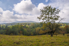 Parque nacional de Magura (parque Narodowy de Magurski) Fotografia de Stock