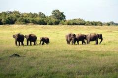 Parque nacional de Minneriya Fotografia de Stock