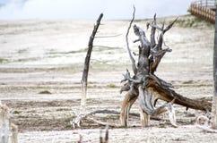Parque nacional de Paintpots Yellowstone dos artistas, Wyoming imagens de stock