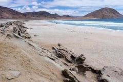 Parque nacional de Pan de Azucar, o Chile imagem de stock royalty free