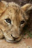 Parque nacional de Pilanesberg Imágenes de archivo libres de regalías