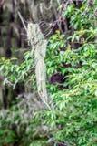 Parque nacional de Potatso Fotografia de Stock Royalty Free