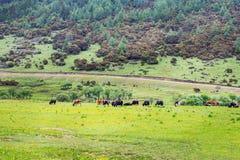 Parque nacional de Potatso Imagens de Stock Royalty Free