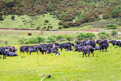 Parque nacional de Potatso fotos de archivo