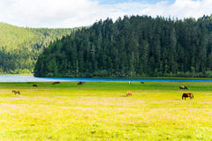 Parque nacional de Potatso, Shangri-La Fotos de Stock Royalty Free