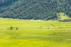 Parque nacional de Potatso, Shangri-La Imagens de Stock