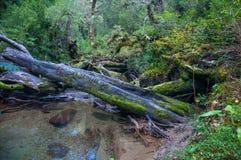 Parque Nacional de Queulat, Carretera austral, carretera 7, Chile Fotos de archivo libres de regalías