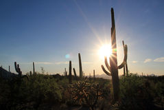 Parque nacional de Saguaro Imágenes de archivo libres de regalías