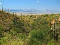 Parque nacional de Saguaro, AZ Imagens de Stock