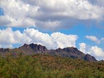 Parque nacional de Saguaro, AZ Fotos de Stock