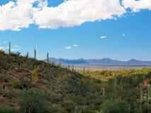Parque nacional de Saguaro, AZ imagen de archivo libre de regalías