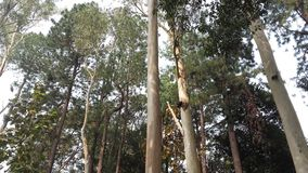 Parque nacional de Satchari Imágenes de archivo libres de regalías
