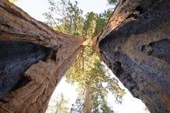 Parque nacional de secoya Fotografía de archivo libre de regalías