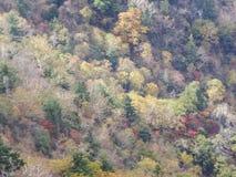 Parque nacional de Seoraksan no outono, Gangwon, Coreia do Sul imagem de stock royalty free