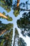 Parque nacional de Sequoia, Califórnia, EUA Fotos de Stock Royalty Free