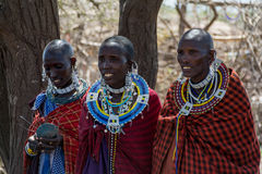 Parque nacional de Serengeti, Tanzânia - vila de Maasai Foto de Stock
