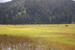 Parque nacional de Shangri-La Pudacuo imagen de archivo