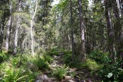 Parque nacional de Skuleskogen, Hoega Kusten, Suécia Imagens de Stock