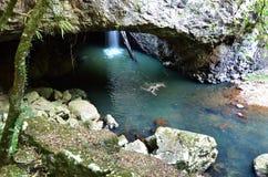 Parque nacional de Springbrook - Queensland Austrália imagem de stock royalty free