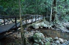 Parque nacional de Springbrook - Queensland Austrália Imagem de Stock
