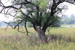 Parque nacional de Sultanpur fotos de archivo