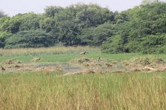 Parque nacional de Sultanpur imágenes de archivo libres de regalías